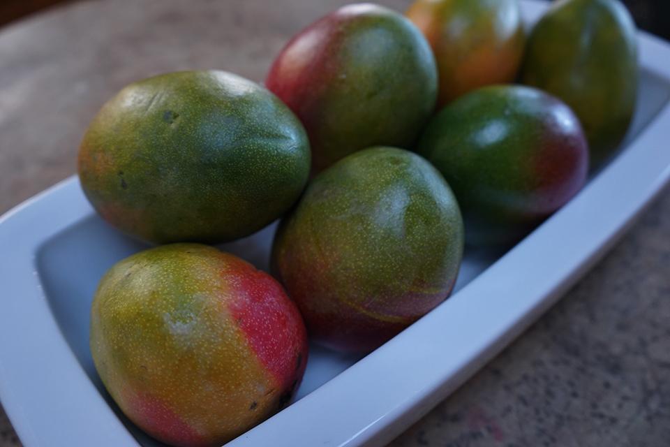 <a class=&quot;wonderplugin-gridgallery-posttitle-link&quot; href=&quot;http://www.underthemangotree.crespoorganic.com/2016/06/26/the-kent-mango/&quot; target=&quot;_blank&quot;>The Kent Mango</a>