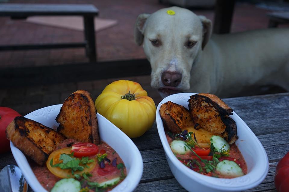 Inca & Mango Gazpacho