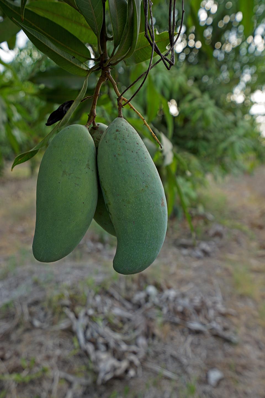Sweet Mango Nude Photos 65