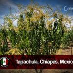 Chiapas_2