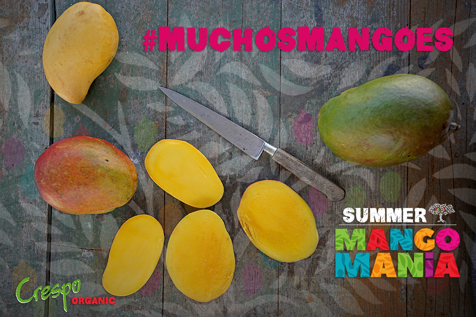 <a class=&quot;wonderplugin-gridgallery-posttitle-link&quot; href=&quot;http://www.underthemangotree.crespoorganic.com/2018/06/26/the-crespo-organic-kitchencelebrates-summer-mango-mania-with-muchosmangoes/&quot; target=&quot;_blank&quot;>The Crespo Organic Kitchen Celebrates Summer Mango Mania with #MuchosMangoes</a>