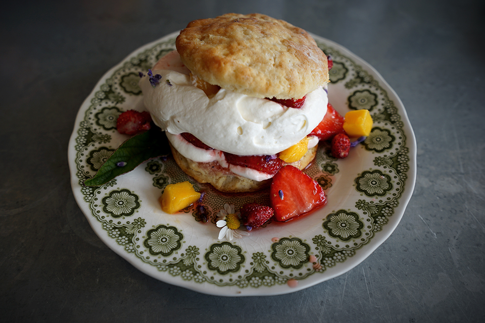 <a class=&quot;wonderplugin-gridgallery-posttitle-link&quot; href=&quot;http://www.underthemangotree.crespoorganic.com/2018/07/04/flowery-salty-mango-strawberry-shortcake/&quot; target=&quot;_blank&quot;>Flowery, Salty Mango-Strawberry Shortcake</a>