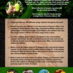 Mexican Mango History