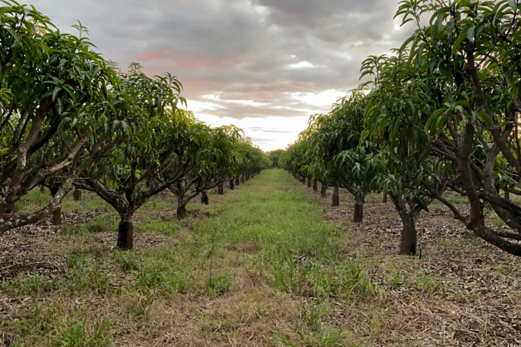 Chipas Orchards- December 2020