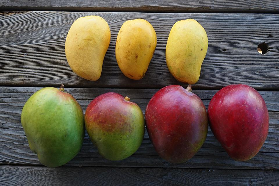 "<a class=""wonderplugin-gridgallery-posttitle-link"" href=""https://www.underthemangotree.crespoorganic.com/2016/05/19/newleafmangomania/"" target=""_blank"">Santa Cruz Summer Mango Mania, a Hands-On Cooking Class</a>"