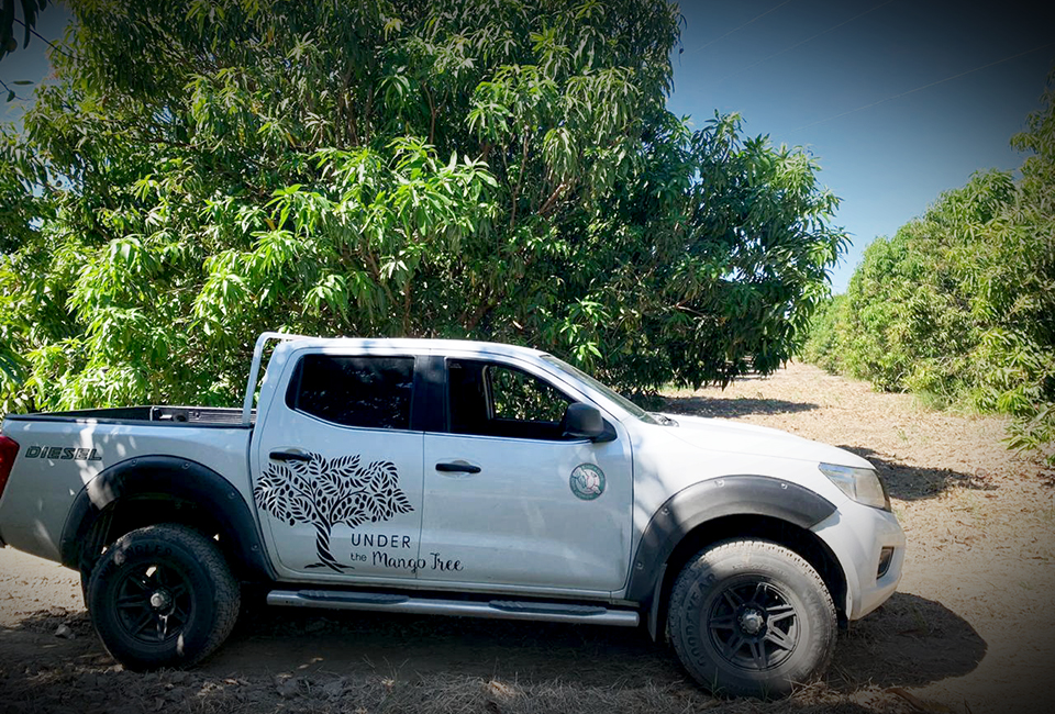 "<a class=""wonderplugin-gridgallery-posttitle-link"" href=""https://www.underthemangotree.crespoorganic.com/2020/01/29/mexican-mango-season-opens/"" target=""_blank"">Mexican Mango Season Opens….</a>"